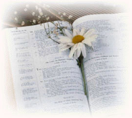 Bible and a Daisy